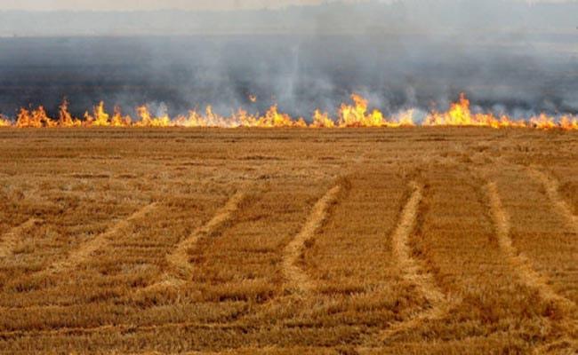 Poljoprivreda: Štetnost spaljivanja biljnih ostataka