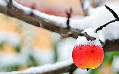 Poljoprivredni savjetnik: Zaštita voćki od niskih temperatura
